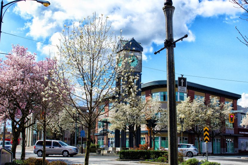 Spring 2016 Cherry BlossomFlowers
